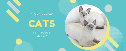Did You Know Cats Can Reduce Stress