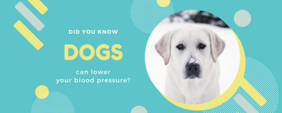 Did You Know Dogs Can Lower Your Blood Pressure